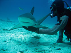 St Maarten Shark Dive